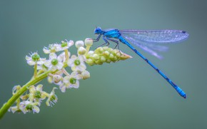 Picture flower, dragonfly, insect