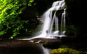 Picture greens, forest, summer, leaves, water, branches, Park, the dark background, stones, shore, foliage, waterfall, moss, …