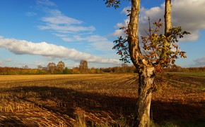 Picture field, autumn, tree, trunk, arable land