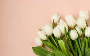 Picture flowers, background, tulips, buds