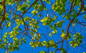 Picture summer, the sky, leaves, branches, tree, spring, summer, leaves, spring