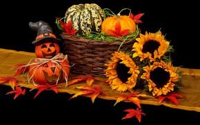 Picture sunflowers, pumpkin, Halloween, 31 Oct, krinke, 2019