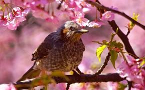 Picture look, leaves, light, flowers, branches, tree, bird, Bush, spring, pink, flowering, bokeh