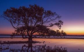 Picture landscape, sunset, tree, Fleur Walton