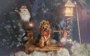 Picture look, light, snow, bench, holiday, toy, dog, doll, shop, Christmas, lantern, New year, haze, tree, …