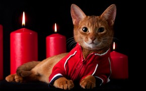 Picture cat, look, kitty, flame, clothing, candles, red, lies, black background, jacket, face, tracksuit