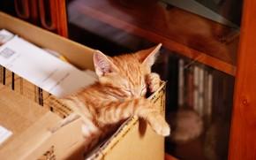 Picture cat, pose, kitty, box, books, sleep, legs, baby, red, muzzle, sleeping, shelf, tired, wardrobe, kitty, …