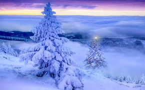 Picture winter, landscape, tree, the evening