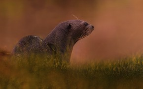 Picture grass, nature, tree, glade, otter, photoart, river