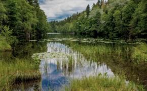Picture grass, landscape, nature, lake, beauty