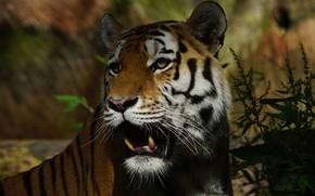 Picture look, face, light, nature, tiger, portrait, plants, mouth, fangs, shadows