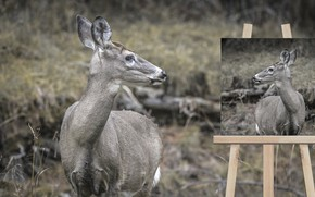Picture nature, deer, easel