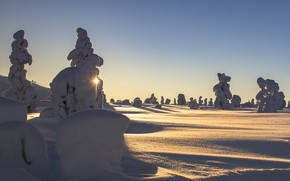 Picture winter, the sun, rays, snow, trees, landscape, nature, ate, Finland, Lapland