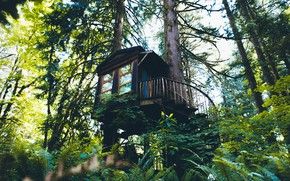 Picture forest, ladder, tree house