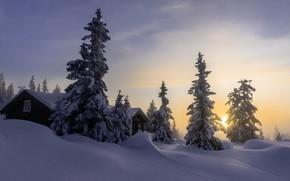 Picture winter, the sky, snow, nature, house, dawn, tree, morning, Jorn Allan Pedersen