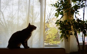 Picture cat, cat, look, leaves, branches, pose, house, room, furniture, plant, silhouette, window, pot, curtains, tree, …
