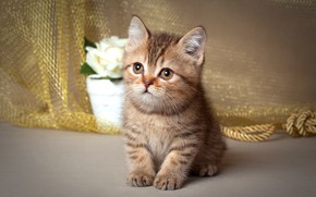 Picture cat, flower, kitty, baby, fabric, pot, Munchkin