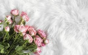 Picture roses, bouquet, fur