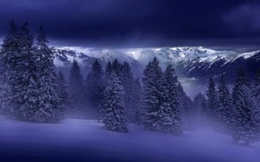 Picture Winter, Mountains, Snow, Forest, Spruce forest