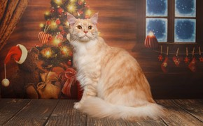 Picture cat, Maine Coon, Natalia Lays, cat, tree, red, New year, cat