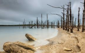 Picture sea, trees, shore