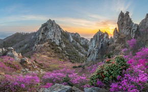 Picture landscape, mountains, nature, stones, spring, flowering, South Korea