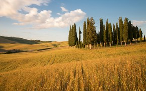 Picture field, clouds, trees, hills, slope, space, Italy, ears, cereals, cypress, Tuscany