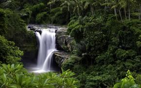 Picture trees, nature, palm trees, waterfall, Indonesia, Tegenungan Waterfall, the island of Bali