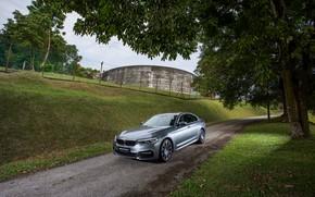 Picture road, trees, grey, BMW, sedan, 530i, 5, four-door, 5-series, G30