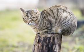 Picture cat, log, sitting