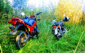 Picture grass, thickets, Enduro, moped alpha