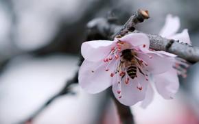 Picture Flowers, Flower, Plant, Plants, Flower, Flowers, Color, Insect, Flora, Plants, Close-up, Insect, Bloom, Flora, Plant, ...