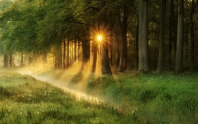 Picture forest, summer, grass, the sun, rays, trees, foliage, summer, grass, forest, path, trees, sunbeams, Joyce …