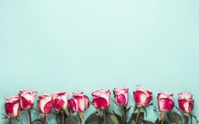 Picture background, blue, roses, buds, composition