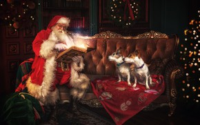 Picture dogs, look, pose, the dark background, room, sofa, magic, two, dog, lights, Christmas, New year, …