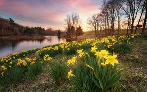 Picture lake, Park, spring, daffodils