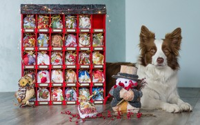 Picture look, face, box, owl, toys, dog, Christmas, gifts, New year, snowman, bags, the border collie