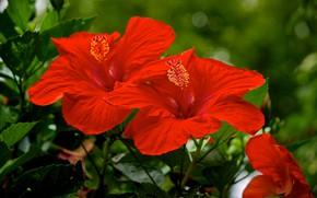 Picture macro, al, hibiscus