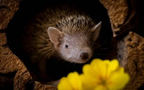 Picture flowers, stump, yellow, muzzle, hedgehog, black background, hedgehog, Peeps, St., hedgehog, hedgehog