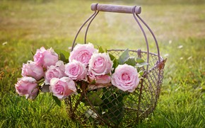 Picture rose, sunset, pink, flowers, roses, basket