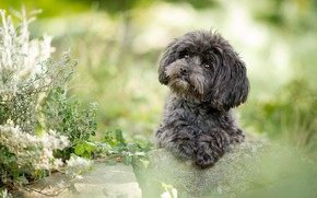 Picture greens, summer, look, flowers, green, stones, background, sweetheart, portrait, dog, plants, paws, puppy, grey, face, …