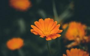 Picture Macro, Color, Flower, Plant, Plants, Flower, Color, Flora, Plants, Close-up, Flora, Plant, by Daniel Spase, …