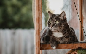 Picture cat, cat, look, face, grey, frame, window