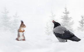 Picture winter, snow, bird, walnut, protein, red, crow