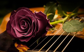 Picture style, mood, rose, guitar, strings, Bud