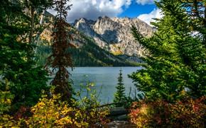 Picture trees, landscape, mountains, nature, lake, Wyoming, USA, Grand Teton, reserve, National Park, National Park, Jenny …