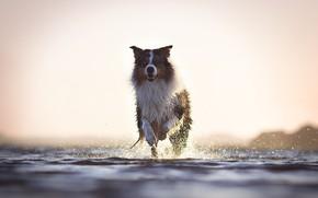 Wallpaper river, each, dog