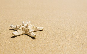 Picture sand, sea, beach, star, summer, beach, sea, sea, sand, starfish