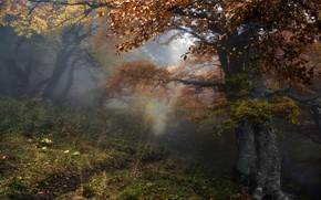 Picture autumn, forest, trees, nature, fog, path, Алексей Милокост
