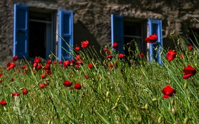 Picture greens, summer, grass, flowers, nature, house, wall, mood, glade, Windows, Mac, Maki, red, shutters, blue